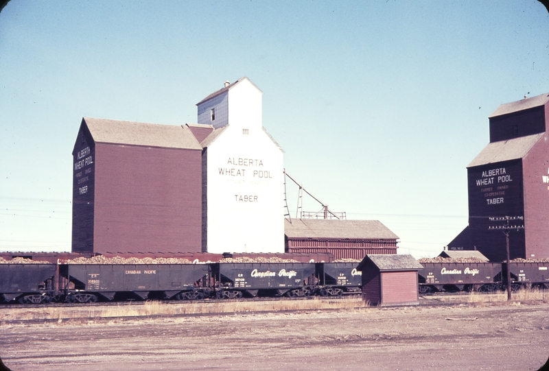 110323: Taber AB Cars loaded with Sugar Beet